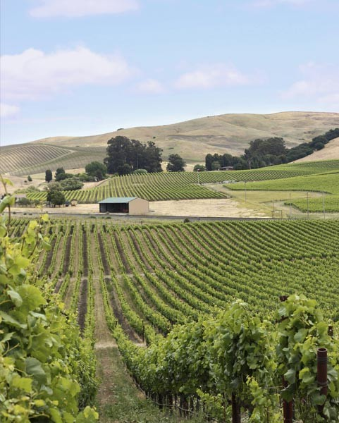 The Craft Brewers of Wine Country